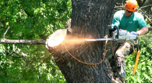 The price aspects in relation to tree removal