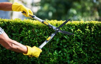 Choose Lawn Care Birmingham Al